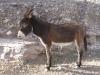 hey-donkey