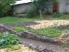 The Garden VI