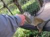 monkeys14